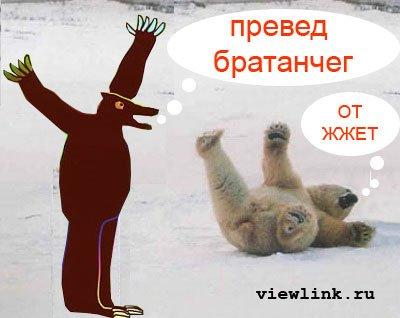 Превед медвед фото №5